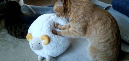 ひつじボールに夢中な猫、そのモチモチ感に肉球離さず