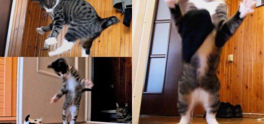 後脚だけで跳び上がる猫、カンガルー並みの脚力を見せる