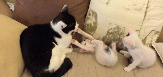 子猫の攻撃避けぬ猫、態度で示す大人の貫禄