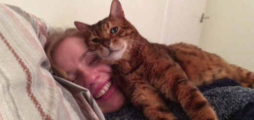 猫による超特級の愛情表現、誰もがイチコロ「顔マクラ」