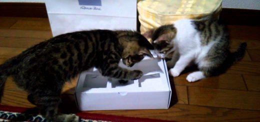 空き箱とパチンコ玉と猫2匹、見ていて飽きないオモチャが完成