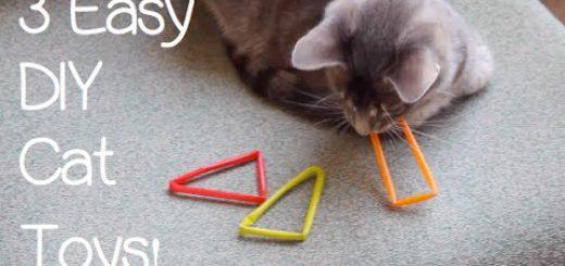 3種のオモチャで飽きさせない、簡単猫オモチャの作り方