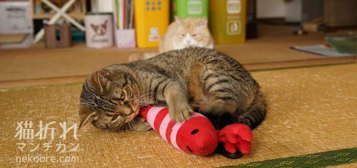 猫蹴り遊ぶ蹴りぐるみ、万歩計でのカウントに挑戦