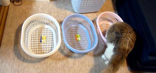 洗濯物に乗る猫対策、カゴ導入も敢えなく失敗