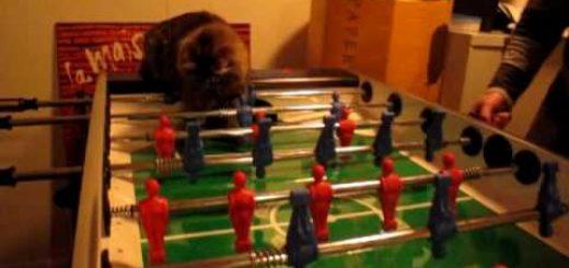オウンゴールを喫した猫、自らのシュートで一矢報いる