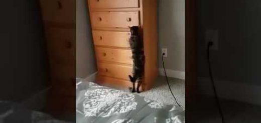 器用に隠れる忍者猫、ワンランク上の技術を見せる