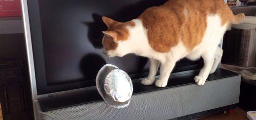意外と丈夫な猫のヒゲ、その強靱さに猫も困惑