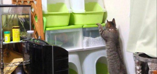 2個から4個に猫のトイレを重層化、設置面積変わらずそのまま