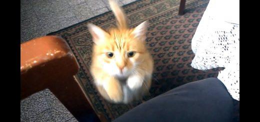 人間を置物と化す猫の魔法、膝上占拠で動きを封じる