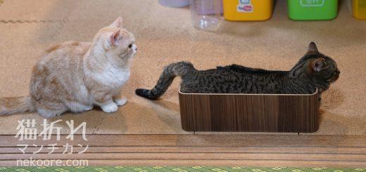 すっぽりハマったドヤ顔の猫、ケーブル収納ボックスの新用途を開発