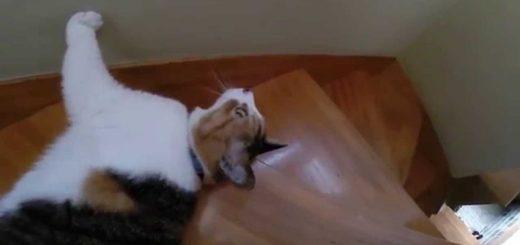 階段を滝に見たてて滑る猫、流るるさまは水の如く