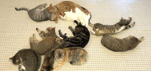 隣り合い転んで伸びて重なって、十匹十色の眠り猫たち