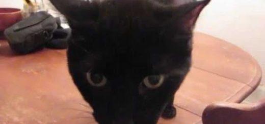 父ちゃんの肩に跳び乗る、黒猫は特等席に寛ぎ得意げ