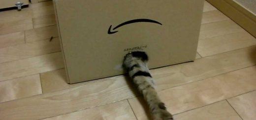 テープ剥がしのあの穴が、猫のオモチャにメタモルフォーゼ