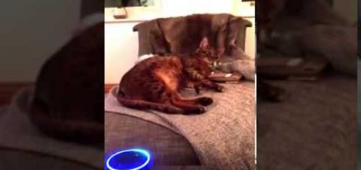 音声対話の人工知能、猫との会話もお手の物