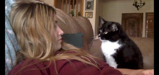 撫でられ上手な甘えん坊猫、ほどよい加減の督促が効く