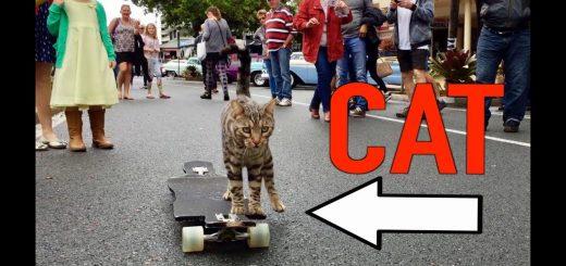 スケボー乗りの猫のBoomer、そのスキルを着実に上げる