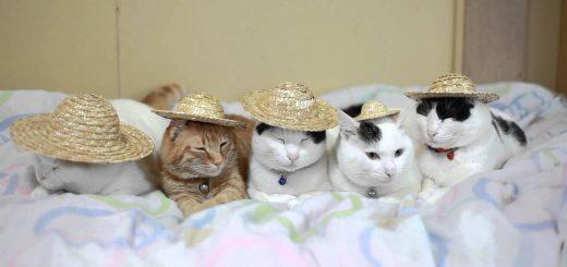 麦わら帽子を被った猫たち、落とし方にも個性が光り