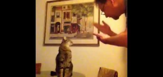 耳が聞こえぬ聡明な猫、手話のサインを理解する