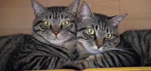 左右対称仲良し兄弟、フォルムはまるで耳付きハート