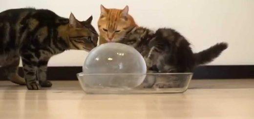 猫らが喜ぶ真ん丸氷、失敗知らずの作り方