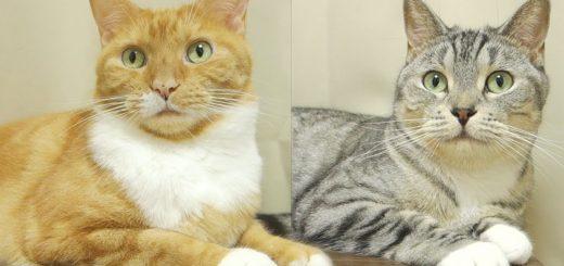 一緒に住んでりゃここまで似てくる、2匹の猫のシンクロ度合い