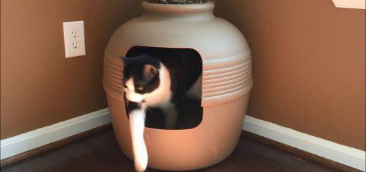植木鉢型猫トイレ、お部屋になじむインテリアと言えなくもなく