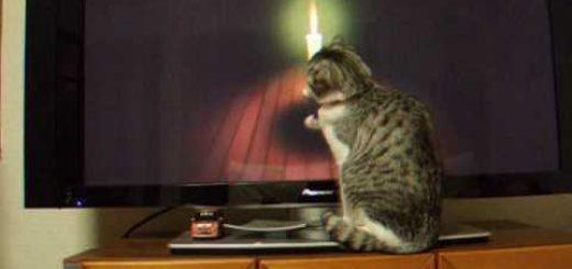 一緒に座禅に参加する猫、心を鎮めて蛾を狙う
