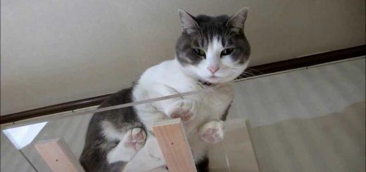 透明アクリル猫用スタンド、肉球腹肉見放題