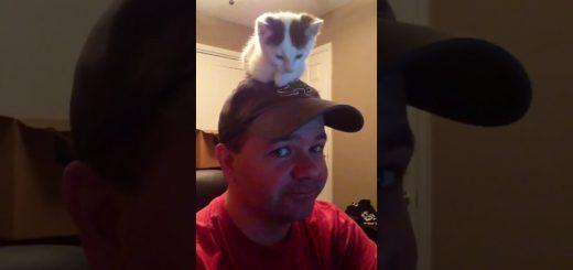 おっさんの頭の上に座る猫、カメラ目線のドヤ顔も納得