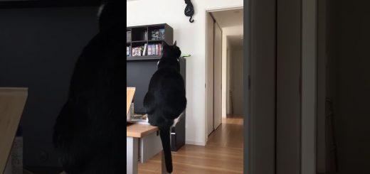 猫による細かすぎるモノマネ選手権、レベルの高い形態模写