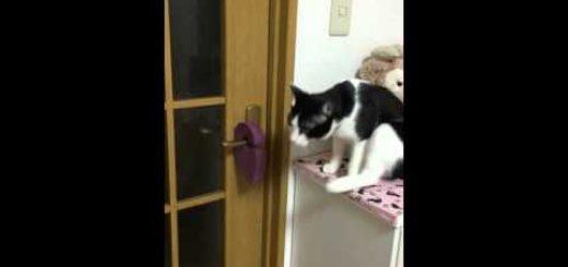 脱走防止のドアストッパー、賢い猫はくるりと回して難なく開けて