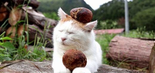 白き秋載き抱える猫、松茸をコロリと落としてなぜかドヤ顔