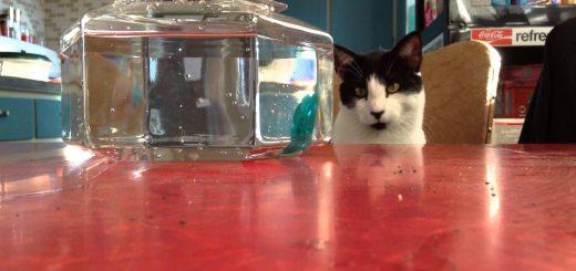 カタカタ動く怪しきお魚、見つめる猫は最後に手が出て
