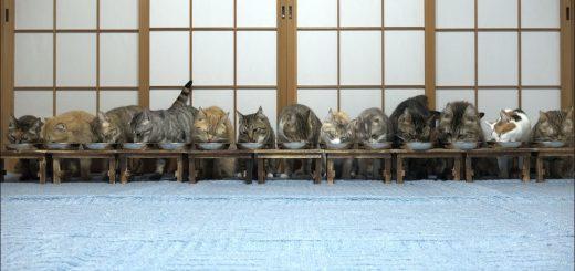 一列に居並ぶ猫の食事風景、些細な理由で表情一変