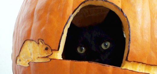 お手軽細工のかぼちゃランタン、猫が入って見事完成