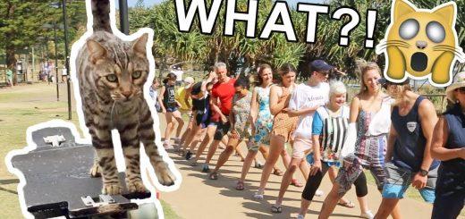 スケボー乗りの猫のBOOMER、連続股下くぐりのギネス記録を更新