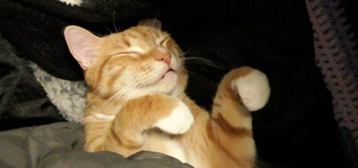 寝袋に包まれ眠る猫の顔、行ったり来たり夢と現を