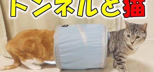 ペットボトルの蓋で興奮する猫たち、トンネルダッシュを繰り返し
