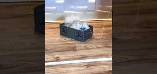 連休の猫の室内遊戯に役立つ、曳いて楽しや靴の空箱