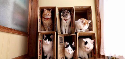 近隣にちょっかい手出しを繰り返す猫、ご近所トラブル自ら誘発