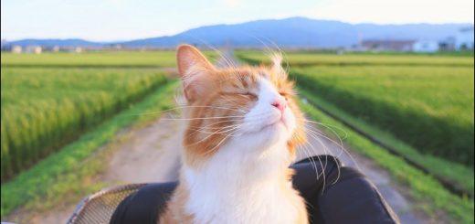 猫と料理との素敵な関係、形づくるは飼い主の観察