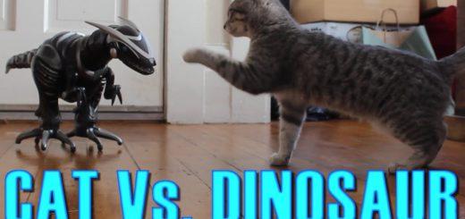 ロボット恐竜に恐れを成す猫、戦い通じて心を開き