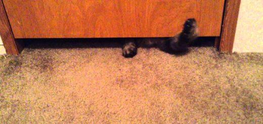 ファットでキュートな猫の逃走、ドアーの隙間を華麗にスルー