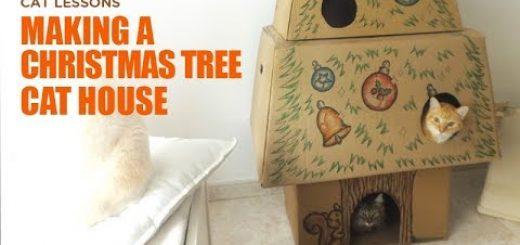 キャットタワーとクリスマスツリー、いっしょにしちゃえば万事解決