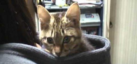 パーカーの背中の重みと温もりと、フードに収まりおんぶされる猫