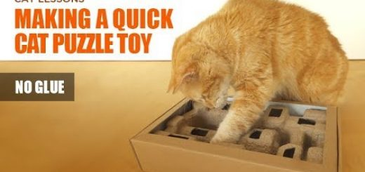 パルプモールド緩衝材と紙ボックスで、猫のおもちゃをDIY
