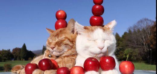 青空に映える林檎は赤々と、茶白と茶トラの頭に高々