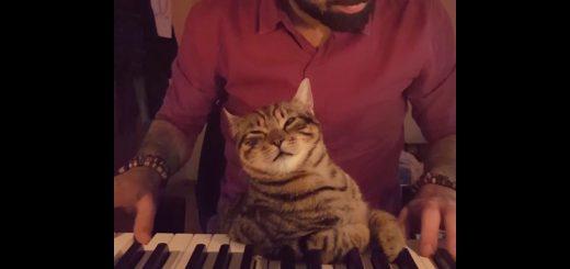 ゆるやかなピアノの調べに眠れる猫、寝落ちてとろけて黒鍵を枕に