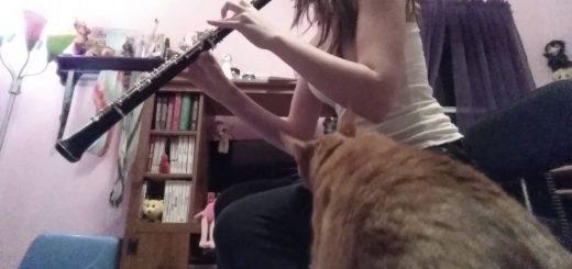 飼い主の奏でるオーボエに手を伸ばす、やめさせようと猫は必死に